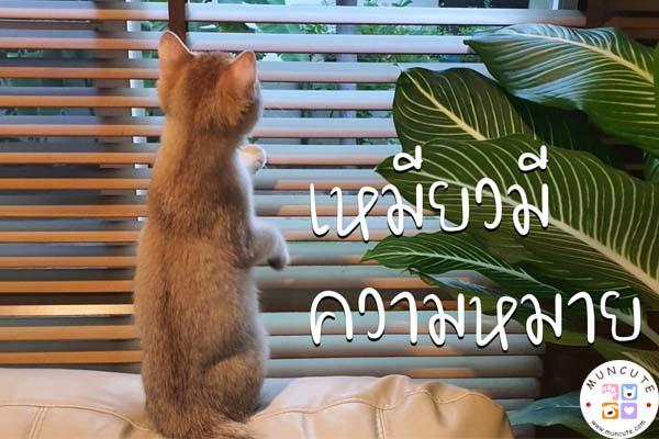 ทาสแมวจงฟัง! เหมียวมีความหมาย