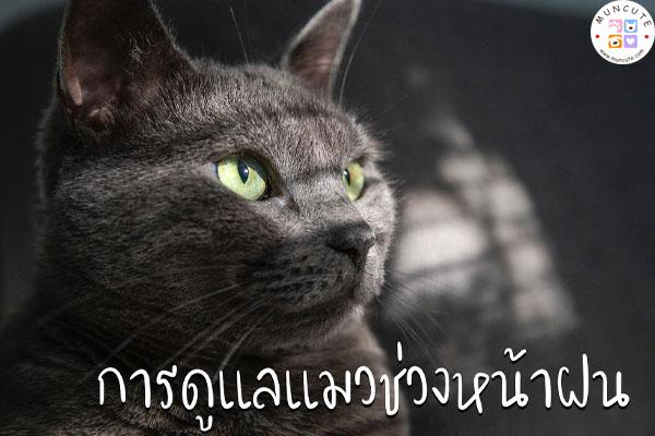 ทาสแมวจงฟัง! การดูแลแมวช่วงหน้าฝน #การดูแลแมวช่วงหน้าฝน
