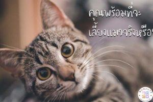 ทาสแมวจงฟัง! คุณพร้อมที่จะเลี้ยงแมวจริงหรือ #คุณพร้อมที่จะเลี้ยงแมวจริงหรือ