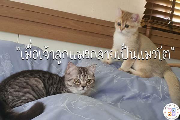 ทาสแมวจงฟัง! เมื่อเจ้าลูกแมวกลายเป็นแมวโต #ทาสแมว