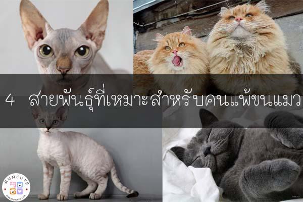 4 สายพันธุ์ที่เหมาะสำหรับคนแพ้ขนแมว #แมวสำหรับคนเป็นภูมิแพ้