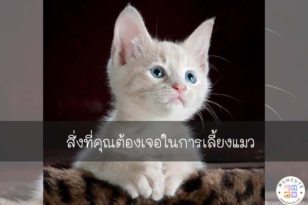 สิ่งที่คุณต้องเจอในการเลี้ยงแมว #ทาสแมว