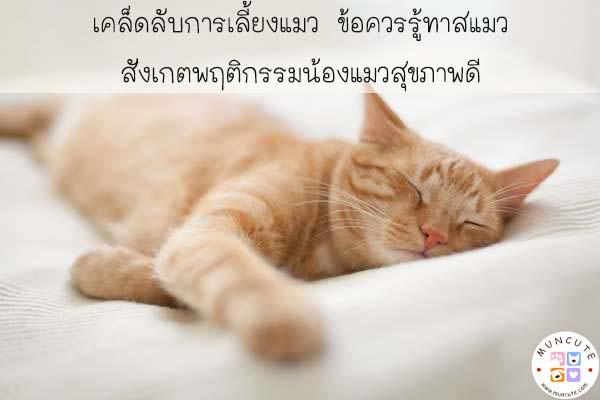 เคล็ดลับการเลี้ยงแมว ข้อควรรู้ทาสแมว สังเกตพฤติกรรมน้องแมวสุขภาพดี #ทาสแมว