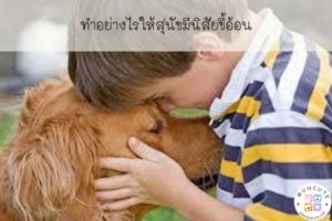 ทำอย่างไรให้สุนัขมีนิสัยขี้อ้อน #เจ้าตูบ