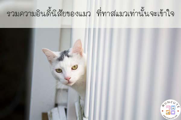 รวมความอินดี้นิสัยของแมว ที่ทาสแมวเท่านั้นจะเข้าใจ #สัตว์โลกน่ารัก