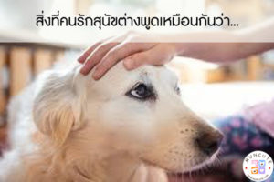 สิ่งที่คนรักสุนัขต่างพูดเหมือนกันว่า... #สัตว์โลกน่ารัก