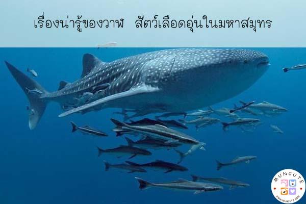 เรื่องน่ารู้ของวาฬ สัตว์เลือดอุ่นในมหาสมุทร #สัตว์โลกน่ารัก