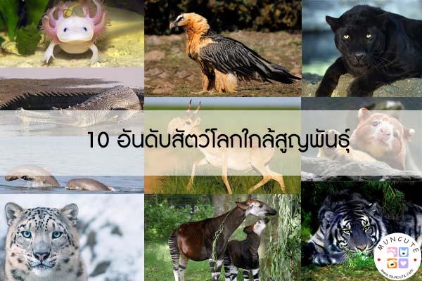 10 อันดับสัตว์โลกใกล้สูญพันธุ์ #สัตว์โลกน่ารัก