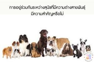 การอยู่ร่วมกันระหว่างสุนัขที่มีความต่างสายพันธุ์มีความสำคัญหรือไม่ #สัตว์โลกน่ารัก