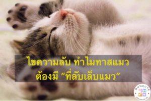 """ไขข้อข้องใจ ทำไมทาสแมวต้องมี """"ที่ลับเล็บแมว"""" #ทาสแมว"""