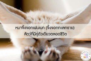 หมาจิ้งจอกเฟนเนก (จิ้งจอกทะเลทราย) สัตว์ที่มีคู่ตัวเดียวตลอดชีวิต #สัตว์โลกน่ารัก