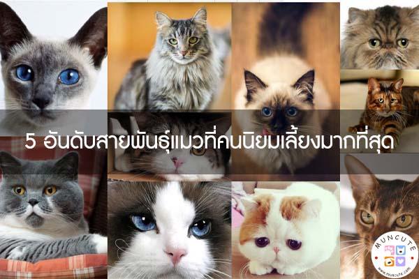 5 อันดับสายพันธุ์แมวที่คนนิยมเลี้ยงมากที่สุด #ทาสแมว