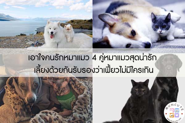เอาใจคนรักหมาแมว 4 คู่หมาแมวสุดน่ารัก เลี้ยงด้วยกันรับรองว่าเฟี้ยวไม่มีใครเกิน