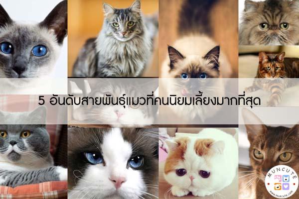 5 อันดับสายพันธุ์แมวที่คนนิยมเลี้ยงมากที่สุด