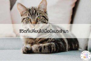 ชีวิตที่เปลี่ยนไปเมื่อมีแมวเข้ามา #ทาสแมว
