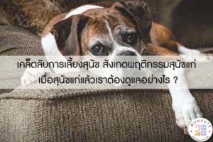 เคล็ดลับการเลี้ยงสุนัข สังเกตพฤติกรรมสุนัขแก่ เมื่อสุนัขแก่แล้วเราต้องดูแลอย่างไร ? #ทาสหมา