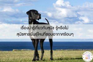 เรื่องน่ารู้เกี่ยวกับสุนัข รู้หรือไม่ สุนัขสายพันธุ์ไหนที่ชอบอากาศร้อนๆ