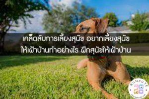 เคล็ดลับการเลี้ยงสุนัข อยากเลี้ยงสุนัขให้เฝ้าบ้านทำอย่างไร ฝึกสุนัขให้เฝ้าบ้าน #คลิปหมา