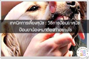 เทคนิคการเลี้ยงสุนัข - วิธีการป้อนยาสุนัข ป้อนยาน้องหมาต้องทำอย่างไร #สัตว์โลกน่ารัก
