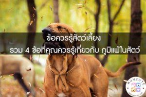 ข้อควรรู้สัตว์เลี้ยง รวม 4 ข้อที่คุณควรรู้เกี่ยวกับ ภูมิแพ้ในสัตว์