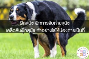 ฝึกสุนัข ฝึกการขับถ่ายสุนัข เคล็ดลับฝึกสุนัข ทำอย่างไรให้น้องถ่ายเป็นที่