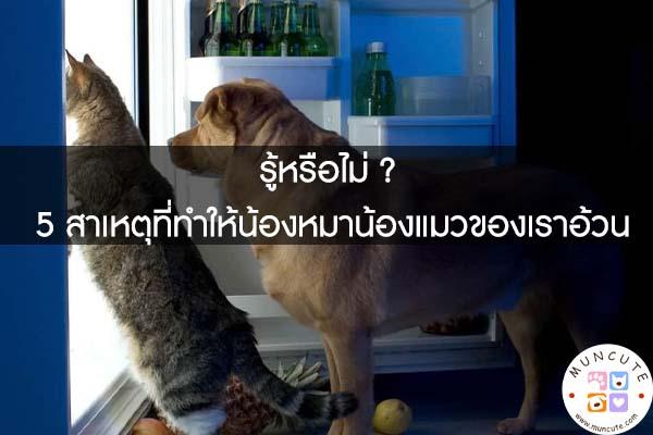 รู้หรือไม่ ? 5 สาเหตุที่ทำให้น้องหมาน้องแมวของเราอ้วน