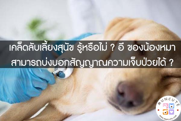 เคล็ดลับเลี้ยงสุนัข รู้หรือไม่ ? อึ ของน้องหมา สามารถบ่งบอกสัญญาณความเจ็บป่วยได้ ?