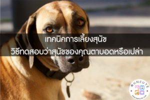 เทคนิคการเลี้ยงสุนัข วิธีทดสอบว่าสุนัขของคุณตาบอดหรือเปล่า