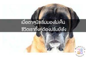 เมื่อตาสุนัขเริ่มมองไม่เห็น ชีวิตเราทั้งคู่ต้องปรับยังไง