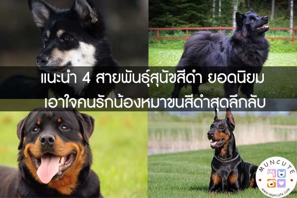 แนะนำ 4 สายพันธุ์สุนัขสีดำ ยอดนิยม เอาใจคนรักน้องหมาขนสีดำสุดลึกลับ