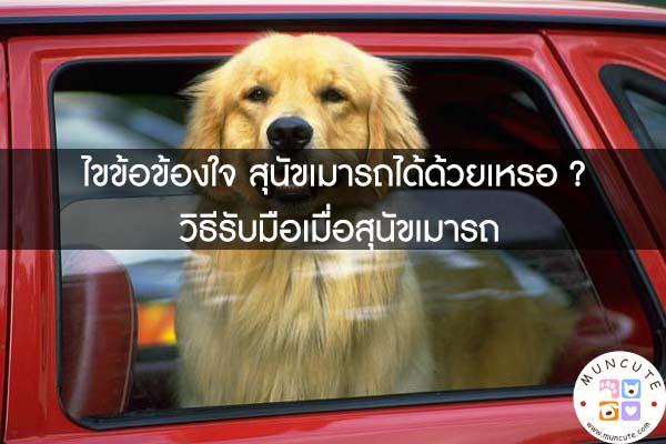 ไขข้อข้องใจ สุนัขเมารถได้ด้วยเหรอ ? วิธีรับมือเมื่อสุนัขเมารถ