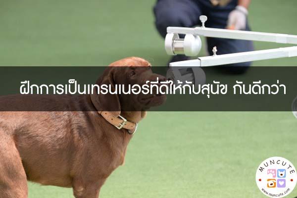 ฝึกการเป็นเทรนเนอร์ที่ดีให้กับสุนัข กันดีกว่า