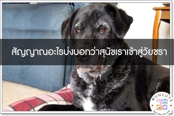 สัญญาณอะไรบ่งบอกว่าสุนัขเราเข้าสู่วัยชรา