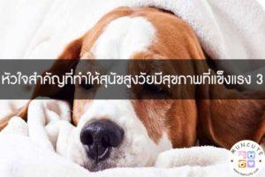 หัวใจสำคัญที่ทำให้สุนัขสูงวัยมีสุขภาพที่แข็งแรง