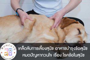 เคล็ดลับการเลี้ยงสุนัข อาหารบำรุงข้อสุนัข หมดปัญหากวนใจ เรื่อง โรคข้อในสุนัข