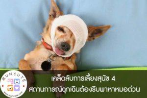 เคล็ดลับการเลี้ยงสุนัข 4 สถานการณ์ฉุกเฉินต้องรีบพาหาหมอด่วน
