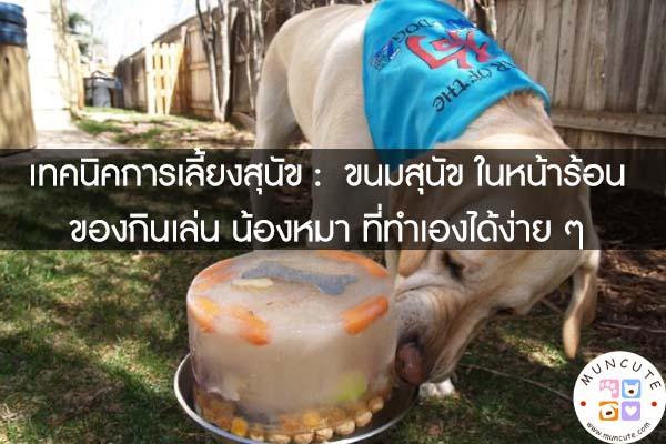 เทคนิคการเลี้ยงสุนัข - ขนมสุนัข ในหน้าร้อน ของกินเล่น น้องหมา ที่ทำเองได้ง่าย ๆ