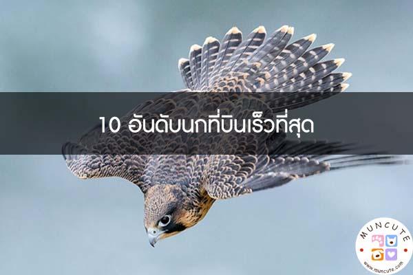 10 อันดับนกที่บินเร็วที่สุด