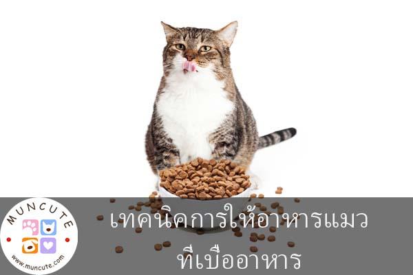 เทคนิคการให้อาหารแมวที่เบื่ออาหาร