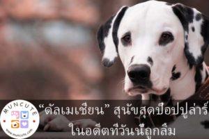 """""""ดัลเมเชี่ยน"""" สุนัขสุดป๊อปปูล่าร์ในอดีตที่วันนี้ถูกลืม"""