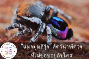 """""""แมงมุมสีรุ้ง"""" สัตว์น่าพิศวงที่ไม่ชอบอยู่กับใคร"""